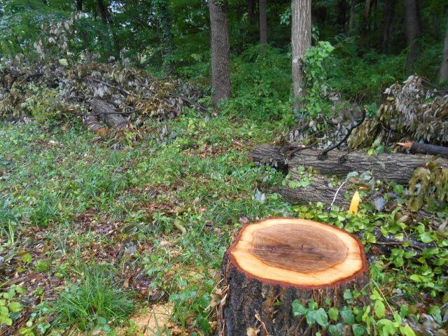 森と切り株